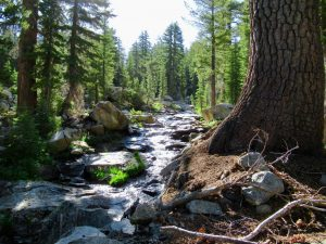 Read more about the article Yosemite High Route